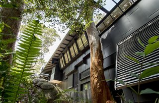 An Arresting Australian Abode by Glenn Murcutt Needs a Buyer - Photo 2 of 8 - Black, weathered zinc clads the exterior. Angled walls and an opening in the eave preserves the mature trees on the site.