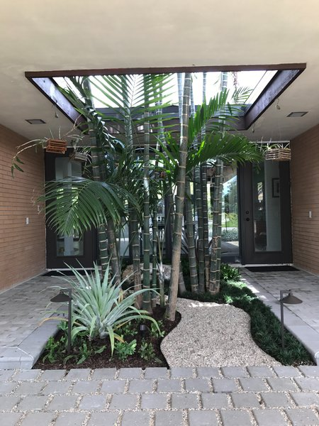 Modern home with outdoor, trees, front yard, and hardscapes. Preexisting clumping cabada palms were retained, underplanted with shade-loving mondo grass and native wart fern, and a winding path of crushed shell was added for maintenance access. Photo 3 of Mid-Century Modern Bungalow