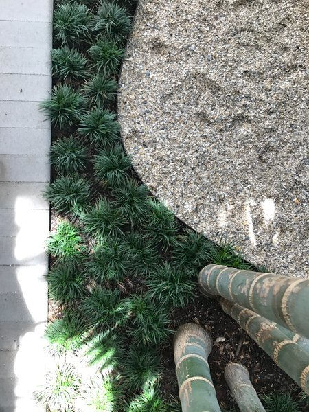 Modern home with outdoor and front yard. A detail of the entry garden shows ringed cabada palm trunks with their colors echoed by the brilliant white crushed shell and deep green mondo grass. Photo 4 of Mid-Century Modern Bungalow