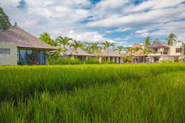 View from the Neighboring Rice Fields Photo  of Villa Lumia Bali modern home