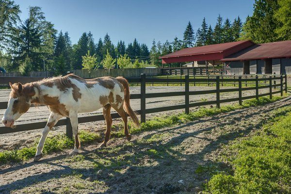 www.SnohomishEquestrianLodge.com Photo 7 of Snohomish Equestrian Lodge modern home