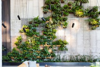 Check Out This Brooklyn Hotel's Dramatic Living Wall Installation
