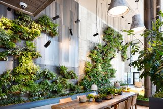 Check Out This Brooklyn Hotel's Dramatic Living Wall Installation - Photo 2 of 6 -