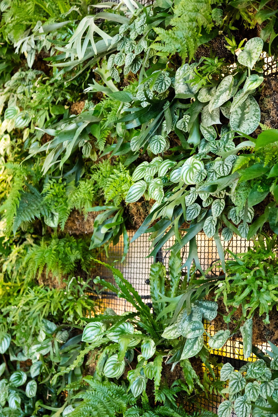 Check Out This Brooklyn Hotel's Dramatic Living Wall Installation - Photo 6 of 7