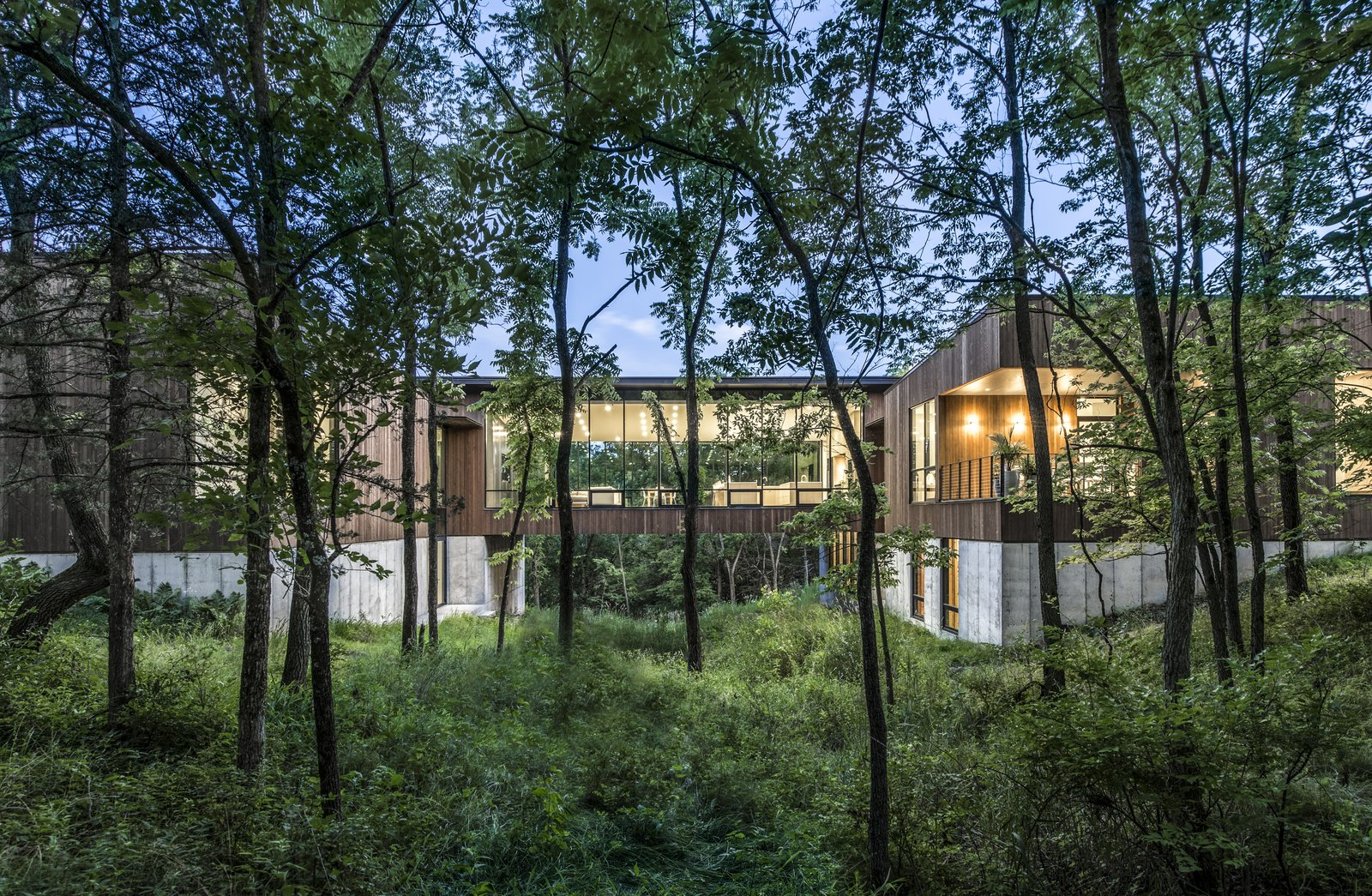 An Incredible Forest Home Leaps Over a Ravine