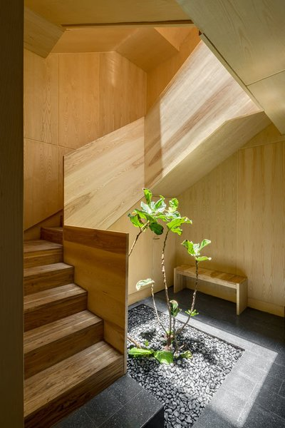 Polished concrete tiles and a wooden bench furnish the entry space.  Light from above falls down onto the greenery, drawing the outdoors in.