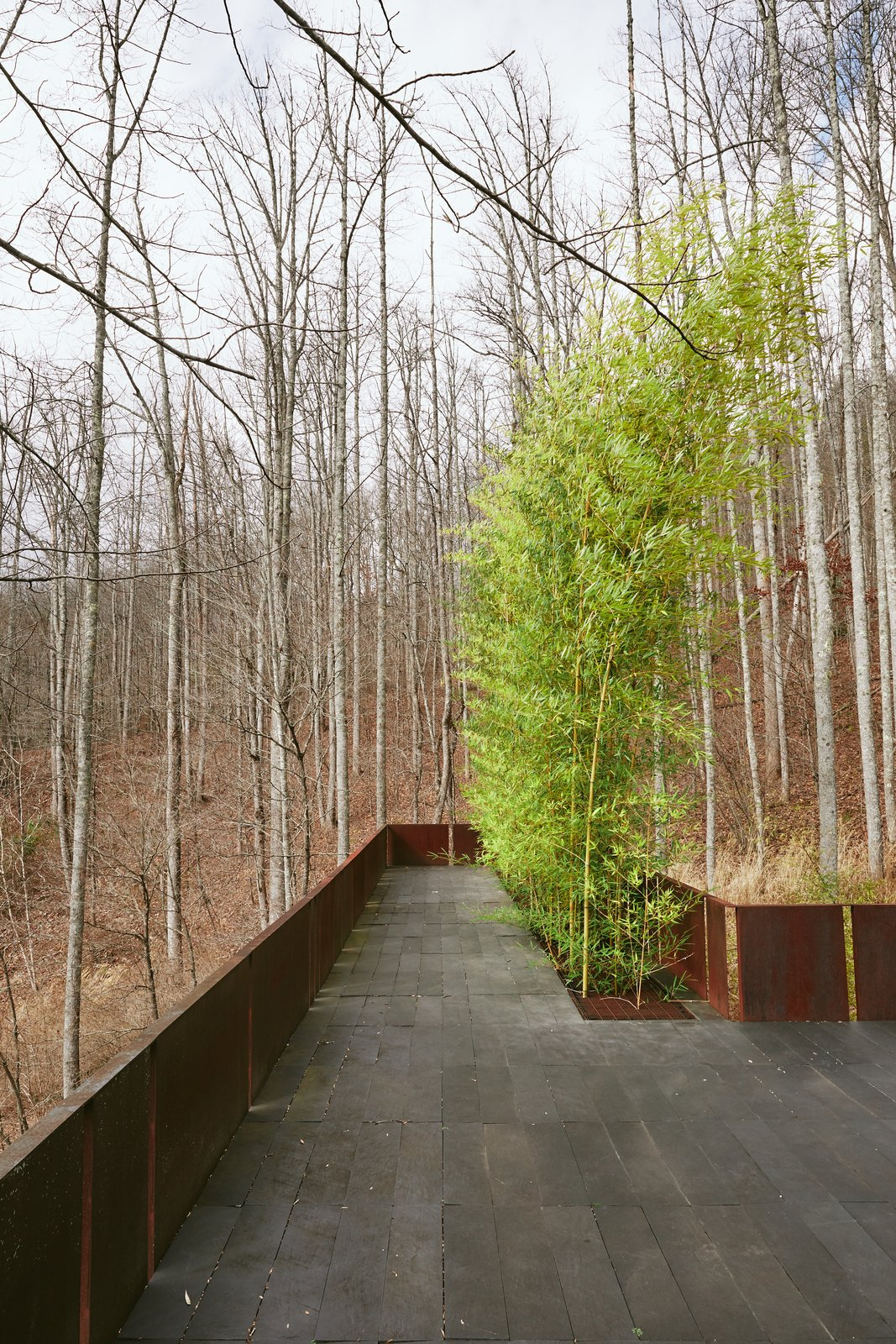 'Tree House' - Bamboo Terrace Tagged: Outdoor, Rooftop, Woodland, Shrubs, Raised Planters, Large Patio, Porch, Deck, Metal Patio, Porch, Deck, Stone Patio, Porch, Deck, Metal Fences, Wall, and Walkways.  Mountain House Modern by Sarah Gillespie - The Lake Team