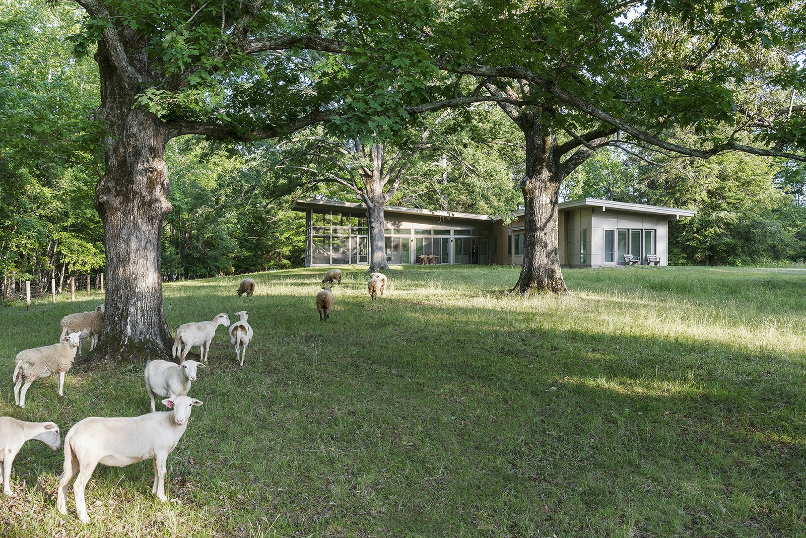 Tagged: Outdoor, Trees, and Side Yard.  The Hammock House by Samsel Architects