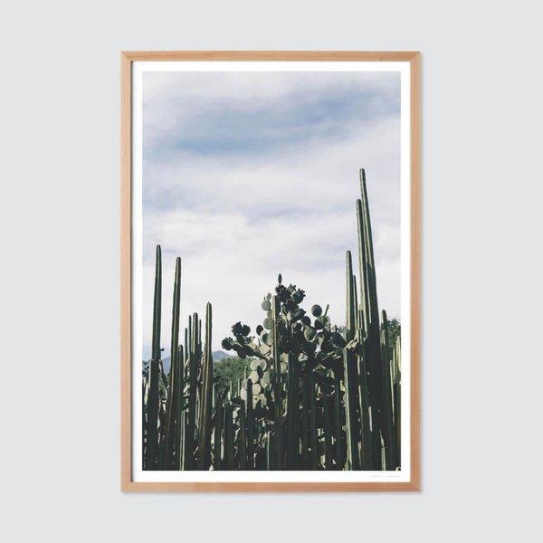Oaxaca 0.3 by Andrew Shepherd