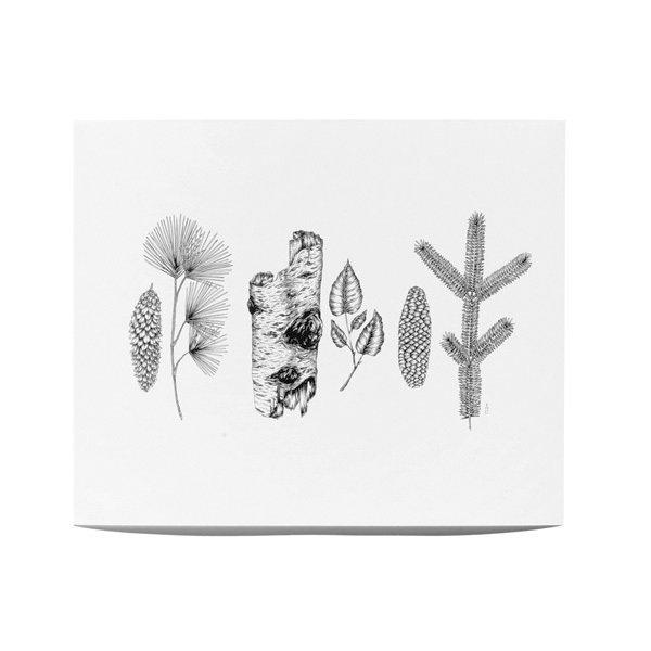 Botanical Print by Lucy Engelman