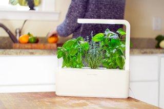 Clueless About Gardening? These 5 Smart Planters Can Help - Photo 3 of 9 -