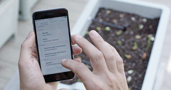 Clueless About Gardening? These 5 Smart Planters Can Help - Photo 2 of 9 -