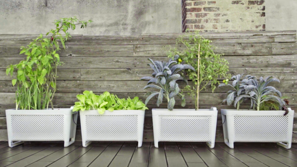 Clueless About Gardening? These 5 Smart Planters Can Help - Photo 1 of 9 -