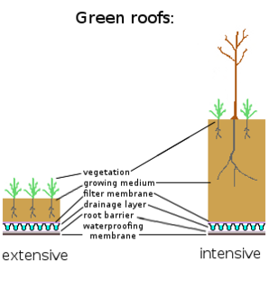 4 Easy Steps to Creating Your Own DIY Green Roof - Photo 4 of 6 - Extensive versus intensive