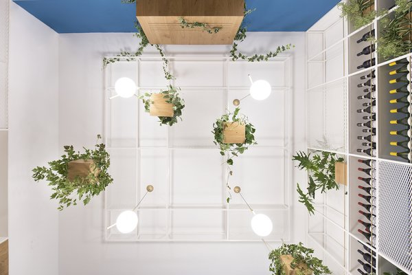 The hanging plants were inspired by the existing 200-year-old Cycas palm in the garden.